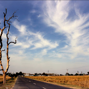 Road to Home by Jatin Malhotra - City,  Street & Park  Street Scenes ( sky, tree, grass, cloud, road )