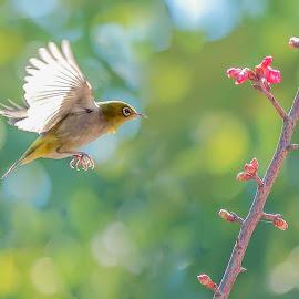 by 善 向 - Animals Birds
