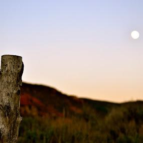 Rising Moon by Seamus Crowley - Landscapes Deserts ( moon, epic, post, mountain, wood, sunset, colorado, focus, dusk, aspen )