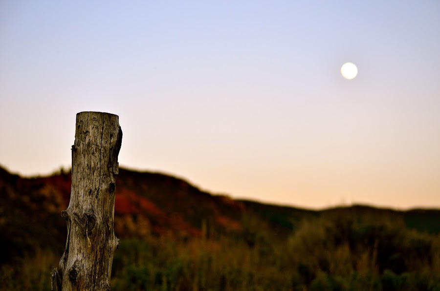 Rising Moon by Seamus Crowley - Landscapes Deserts ( moon, epic, post, mountain, wood, sunset, colorado, focus, dusk, aspen )