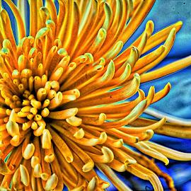 Cactus Chrysanthemum by Judy Lott - Digital Art Things ( imac, bellingham, artistic interpretation, intensify pro, yellow flowers, macro, software, nature, cactus mums, greenery, digital art, summer, artistic vision, flowers )
