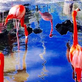 Flaming Pink Flamingos #nofilterrequired #flamingospink #homossasaflorida #homosassawildlifepark #homosassaspringswildlifestatepark by Debbie Squier-Bernst - Uncategorized All Uncategorized