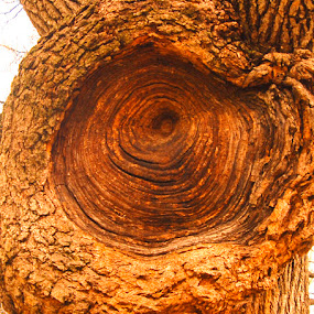 Tree knot in Central Park by Rob Donner - Nature Up Close Flowers - 2011-2013