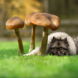Impossible Things by Rainee Tubbs - Digital Art Animals ( mushroom, nature, grass, pet, outdoors, dog, portrait, animal )