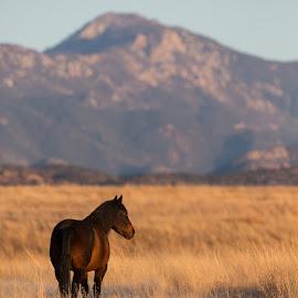 Horse in San Rafael Valley by Gannon McGhee - Animals Horses ( rafael, san, arizona, horse, valley )