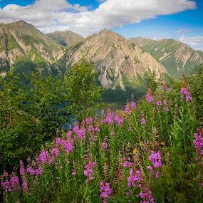 Mountain Overlook Above Lake Kijik Alaska by Kevin Beasley - Landscapes Mountains & Hills ( outdoor, national park, mountains, wildflower, mountain, wildflowers, nature, alaska, fireweed, kijik, lake clark, flower,  )