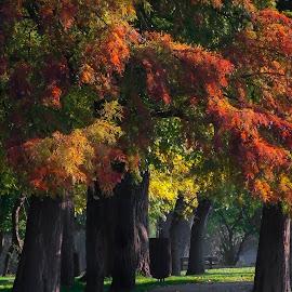 by Nicolaie Subotin - City,  Street & Park  City Parks