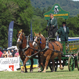 Honiton Show 2014 by Wendy Richards - Animals Horses ( farm, farmers, trailer, horses, devon, farmland, horsedrawn, honiton )
