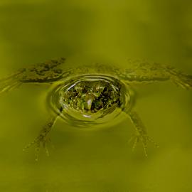 Frog by Abu Jafar Al Mahfuz - Uncategorized All Uncategorized