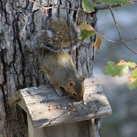 Eating his nuts by Terry Linton - Animals Other