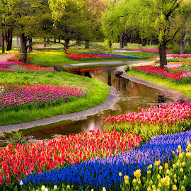 Serpent Garden by Agustin Rafael Reyes - Nature Up Close Gardens & Produce ( water, arcreyes, reflection, 2013, colorful, showa kinen, flower festival, tulips, lavender, spring, spring colorful flowers, japan, nature, creek, tokyo, trees, flowers )