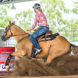 Riding the Dirt Wave by Sarah Sullivan - Sports & Fitness Other Sports ( #barrel racing, #dalby, #sarahsullivanphotography, #qbra )