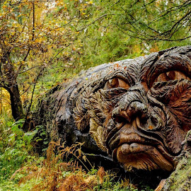 Douglas by John Haswell - Novices Only Objects & Still Life ( northumberland, wood, nationaltrust, douglas, cragside )