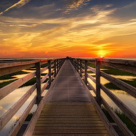 Cape Cod Sunset by Matt Reynolds - Landscapes Sunsets & Sunrises