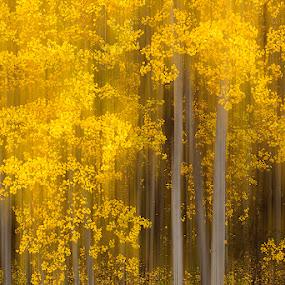 Autumn's Canvas by Tom Cuccio - Abstract Fine Art ( tree, autumn, fall, colorado, blur, aspens, landscape, photoshop, aspen )