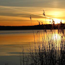 U jezera Medard by Jarka Hk - Landscapes Waterscapes ( waterscape, sunset, plants, lake, walk )