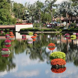 Color Reflectionland by Dee Haun - City,  Street & Park  Amusement Parks ( flower festival, 2018, amusement park, walt disney world, 180507f2245ce1, park, epcot,  )