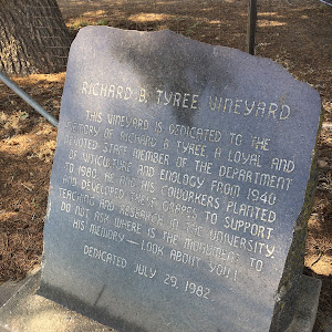 THIS VINEYARD IS DEDICATED TO THEMEMORY OF RICHARD B. TYREE, A LOYAL ANDDEVOTED STAFF MEMBER OF THE DEPARTMENT OF VITICULTURE AND ENOLOGY FROM 1940TO 1980. HE AND HIS COWORKERS PLANTEDAND ...