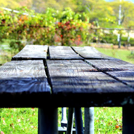 Old picnic table by Janet Smothers - City,  Street & Park  City Parks