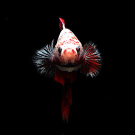 ngedokkin by Ramadhan Bagaskara Arya Parmuka - Animals Fish