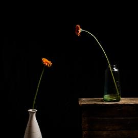 by Ahmad Torabi - Artistic Objects Still Life