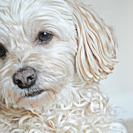 t 2 by B Lynn - Animals - Dogs Portraits ( hdr., mutt., mutts., white., whites. )