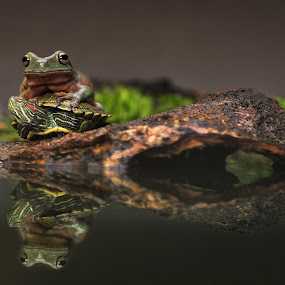 Friendship by Steven Silman - Animals Amphibians