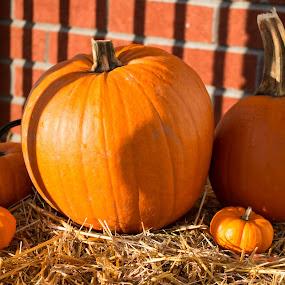 Pumpkins at sunrise by Stéphane Vaillancourt - Public Holidays Halloween ( botte de foin, citrouilles, paille, objectifnumerique.com, halloween, letechnophile.net, pumpkins )