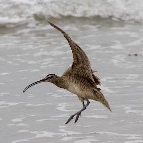 No Name by Mi Mundo - Animals Birds ( sea bird )