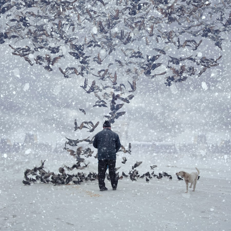 The pigeon feeders by Caras Ionut - Digital Art Things