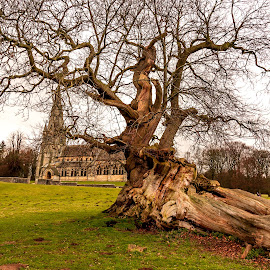 Naked tree by IansLense . - Nature Up Close Trees & Bushes (  )