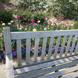 Sit and Enjoy by Marcia Taylor - City,  Street & Park  City Parks (  )