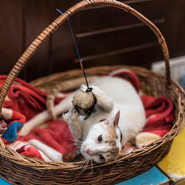 No... It's mine by Vijay Rawale - Animals - Cats Playing ( playing, kitten, bucket, candid moment, domestic cat )