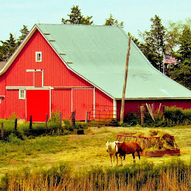 Red Barn by Cyndi McCoun - Buildings & Architecture Other Exteriors ( farm, horses, barn, country )