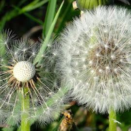 the beauty of diversity ... by Dubravka Penzić - Nature Up Close Other plants (  )