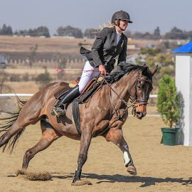 Showjumping action by Dirk Luus - Sports & Fitness Other Sports ( equine, horse, action, sport, showjumping, animal )