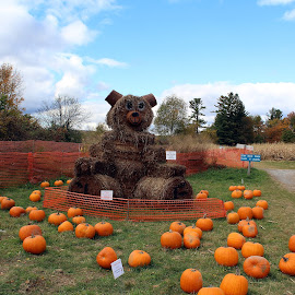 Teddy Bear by Lenora Popa - Public Holidays Halloween ( holiday, fall, pumpkins, harvest, hay sculpture )