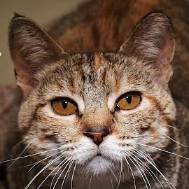 Kendra2 by Michael Cowan - Animals - Cats Portraits