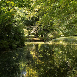 Haagse Bos, Den Haag, Netherlands by Serguei Ouklonski - City,  Street & Park  City Parks ( forest, lush foliage, flora, tourism, scenery, scenic, trees, sight, land, season, wood, canal, day, park, no person, fair weather, expression, reflection, nature, tranquil scene, shore, tree, beauty in nature, leaf, lush, water, environment, outdoors, plant, green color, waterfront, growth, tranquility, scenics - nature, travel, no people, landscape, nature landscape )