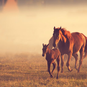 Morning Run by Gusti Yogiswara - Animals Horses