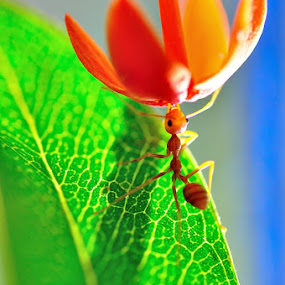 Up by Hirza Kini - Animals Insects & Spiders ( macro ants )