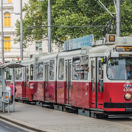 Vienna Tram by Andrew Moore - Transportation Other