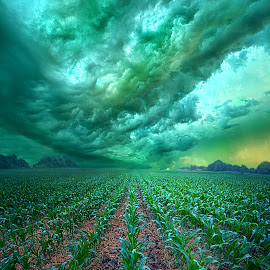 From Beginning To End by Phil Koch - Landscapes Prairies, Meadows & Fields ( love, trending, sunrise, shadow, corn, rural, endless, hope, fineart, sun, canon, spring, beautiful, unity, pastel, joy, season, popular, arts, wisconsin, green, dramatic, rows, light, peace, earth, shadows, crop )