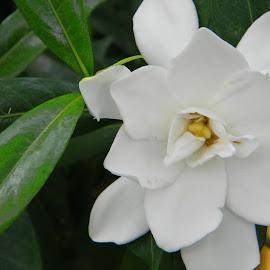 Gardeinia by Karen Hodges - Nature Up Close Gardens & Produce