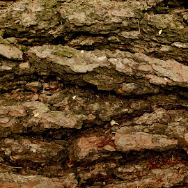 Tree Bark by Susan Englert - Nature Up Close Trees & Bushes ( sawdust, tree, bark, pine, pitch, closeup )
