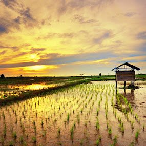 Sunset at Rice Fields by Goestie Rama - Landscapes Prairies, Meadows & Fields
