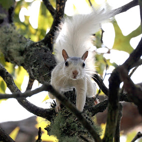 What You Looking At? by Bill Bettilyon - Animals Other Mammals ( mammal, squirrel )