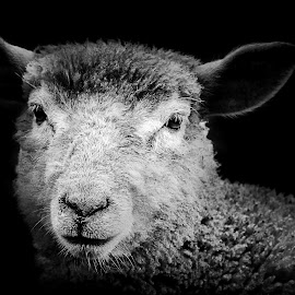 by Michael Böckling - Black & White Animals