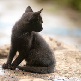 watching out by Annette Flottwell - Animals - Cats Kittens ( gato, kitten, cat, negra, gatita, black )