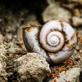 by Uday Shankar - Nature Up Close Other Natural Objects